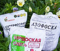 Цветы и клумбы: минеральные удобрения
