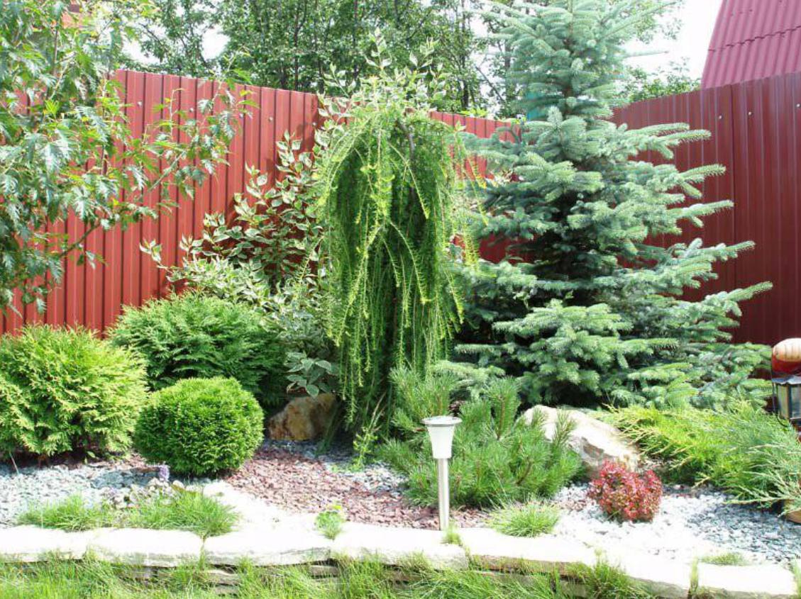 Фото декоративных кустарников в ландшафтном дизайне