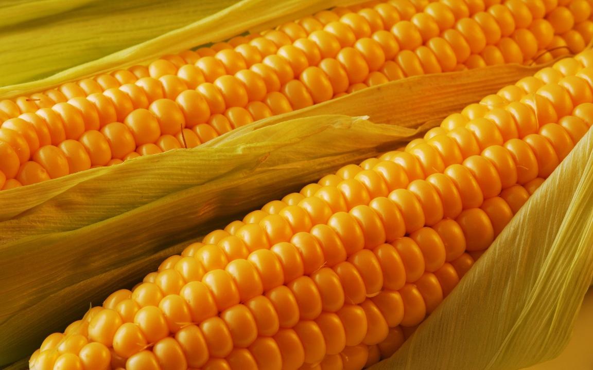 Огород: Кукуруза выращивание и уход на даче
