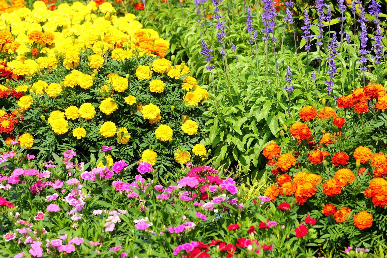 Цветы для цветущей постоянно клумбы