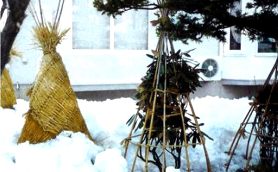 Сад: Груша колоновидная посадка и уход