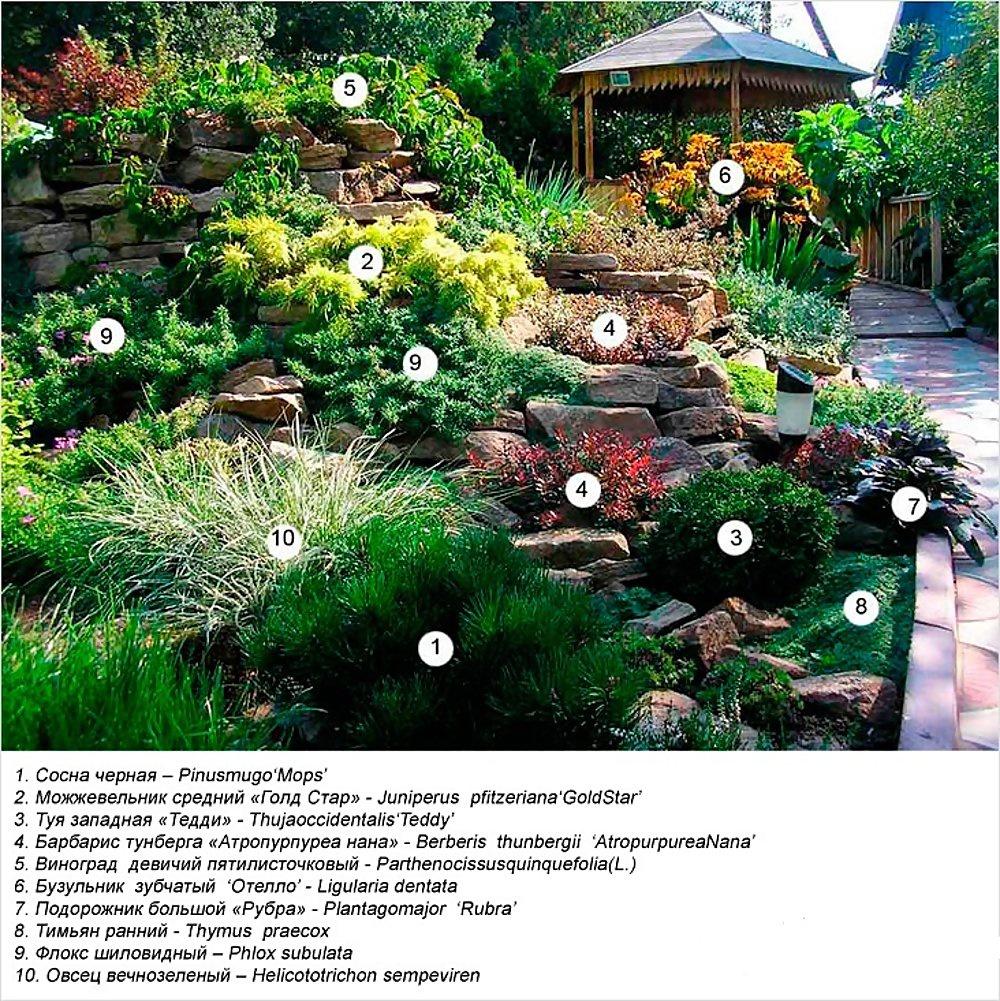 Цветы и клумбы: Как сделать альпийскую горку на даче из камней