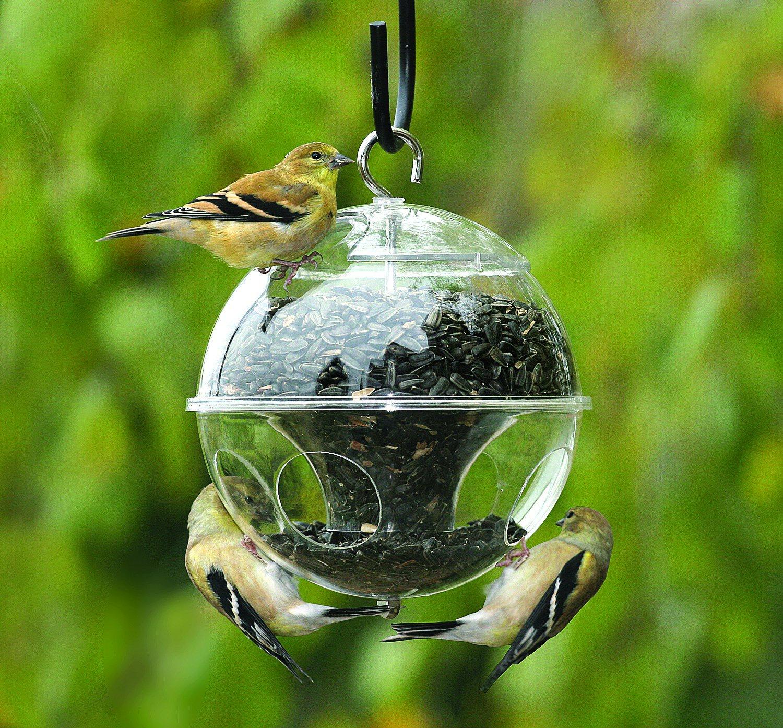 Обустройство: Как привлечь птиц к кормушке