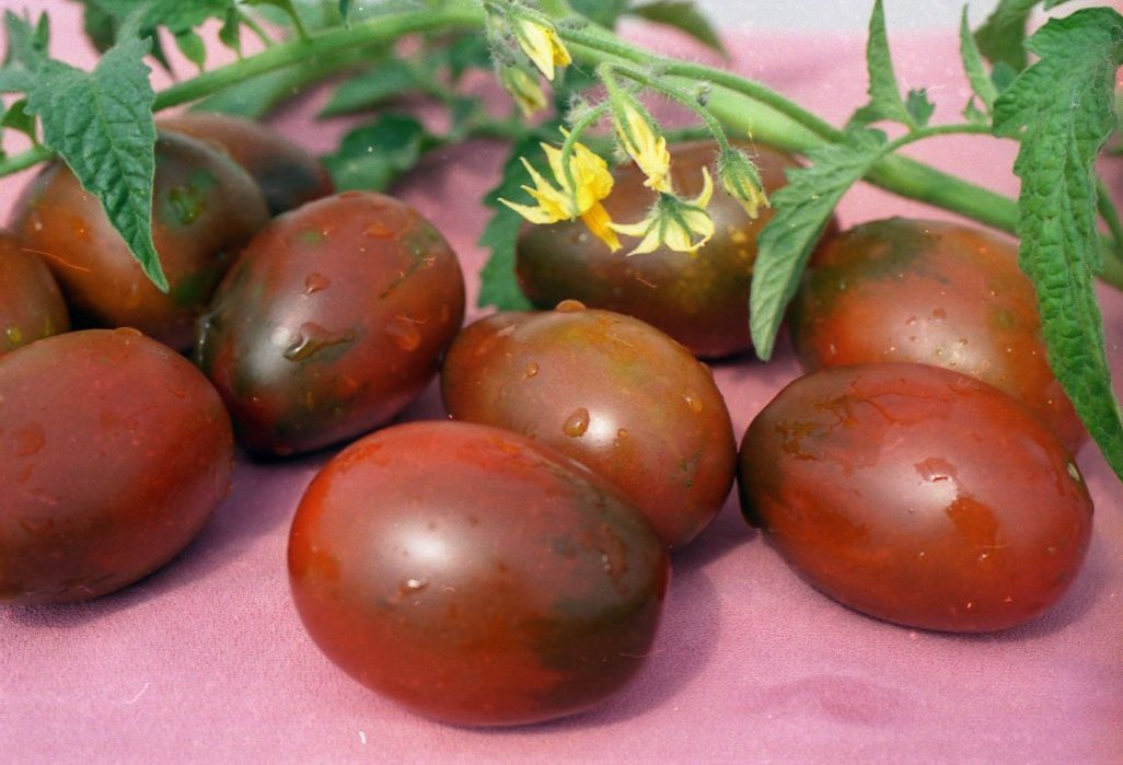 Огород: Сорта томатов для теплиц