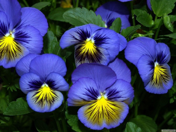 На клумбах растут какие цветы