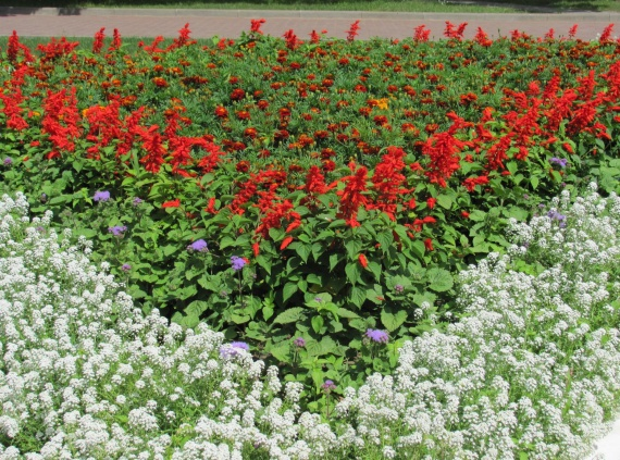 Цветы и клумбы: Однолетние цветы для вашей клумбы на даче