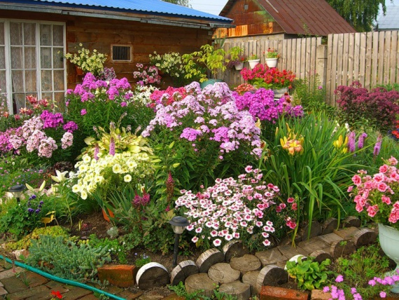Цветы и клумбы: Какие выбрать цветы для своей дачной клумбы