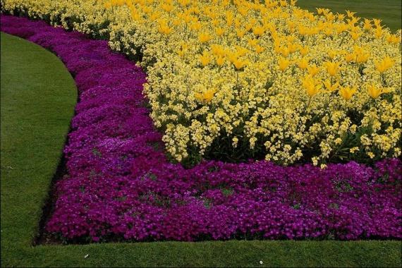 Цветы в растворе купить