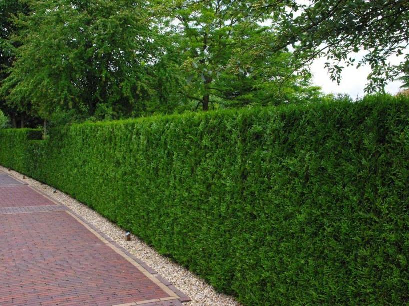 Ландшафтный дизайн: Декоративные кустарники для дачи