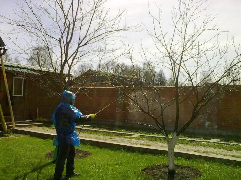 Сад: Вредители плодовых деревьев