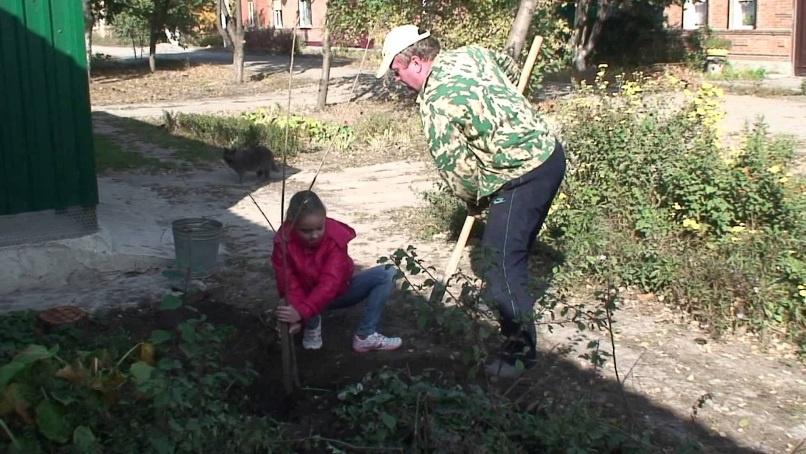 Сад: Посадка плодовых деревьев на участке