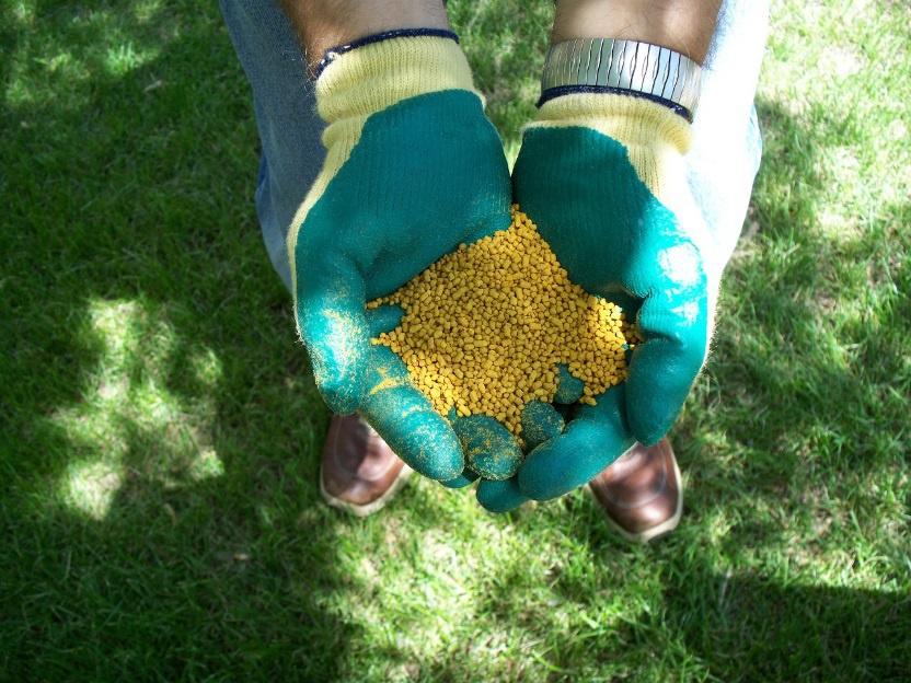 Ландшафтный дизайн: Удобрения для газона: виды, сроки и способы внесения