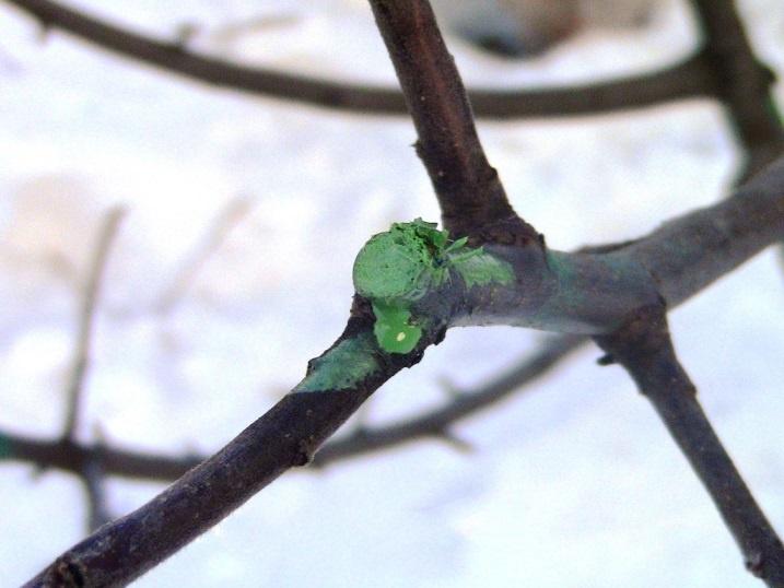 Сад: Как омолодить яблоню