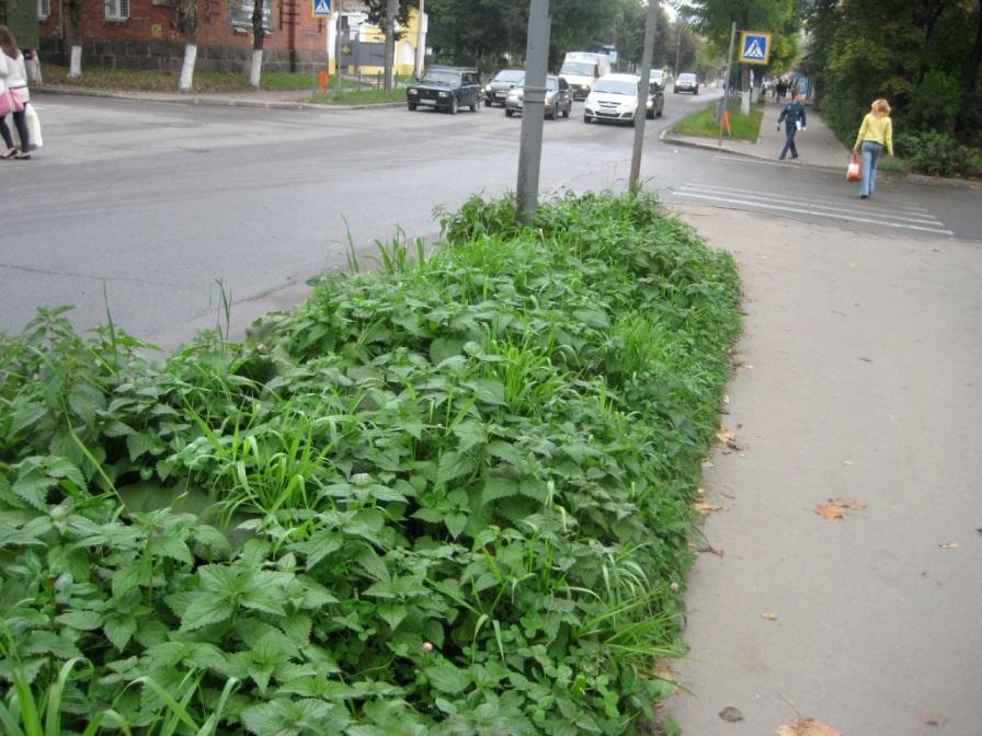 Ландшафтный дизайн: Виды сорняков на газоне, причины появления и способы борьбы с ними