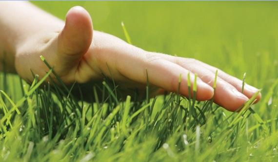 Ландшафтный дизайн: Способы полива газона