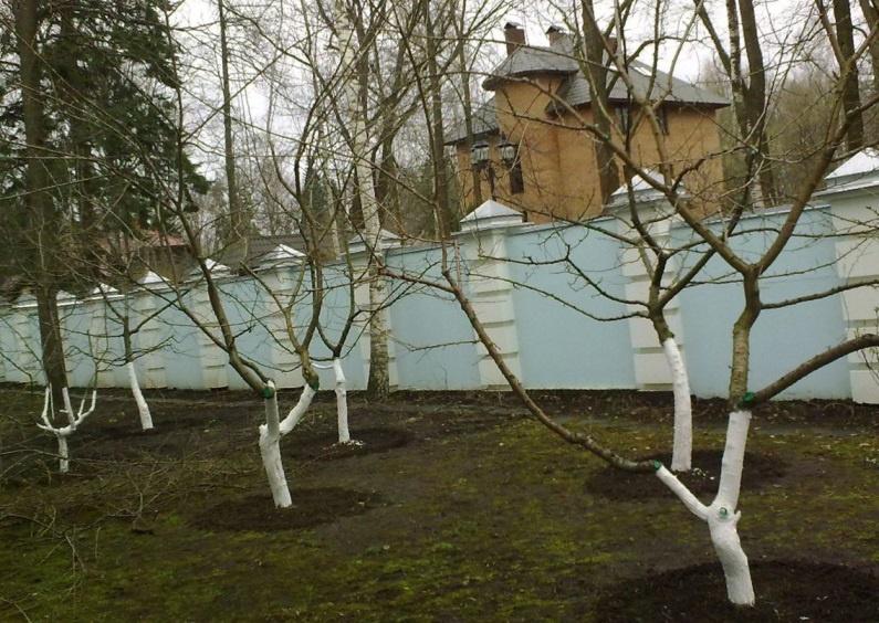 Сад: Обрезка плодовых деревьев