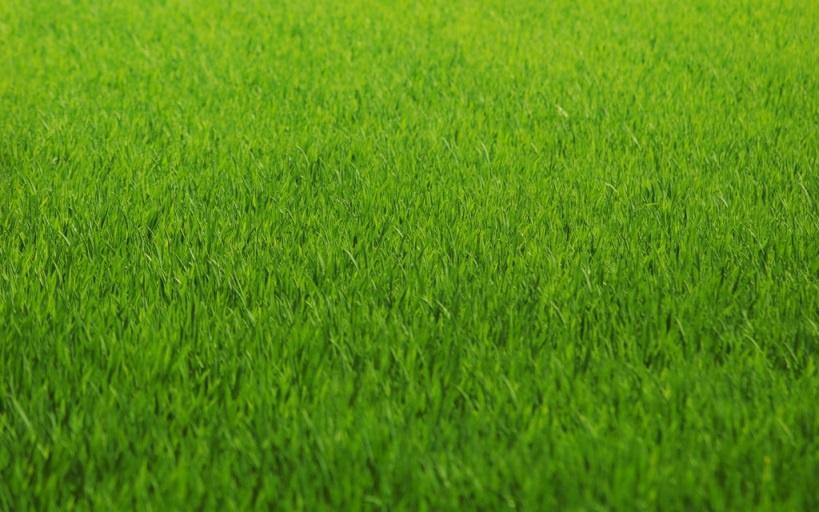 Ландшафтный дизайн: Уход за газоном круглый год