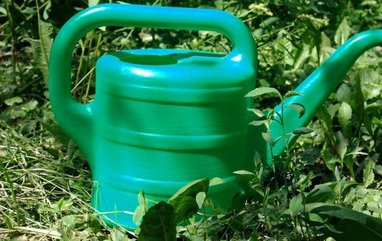 Огород: Выращивание огурцов в открытом грунте
