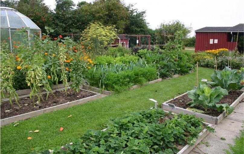 Огород: Полив огорода своими руками