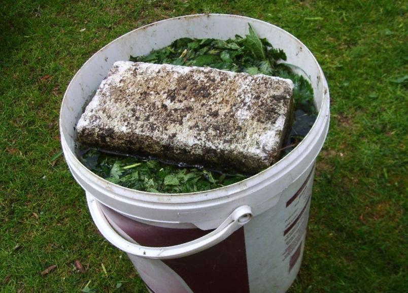 Огород: Как выращивать огурцы в теплице
