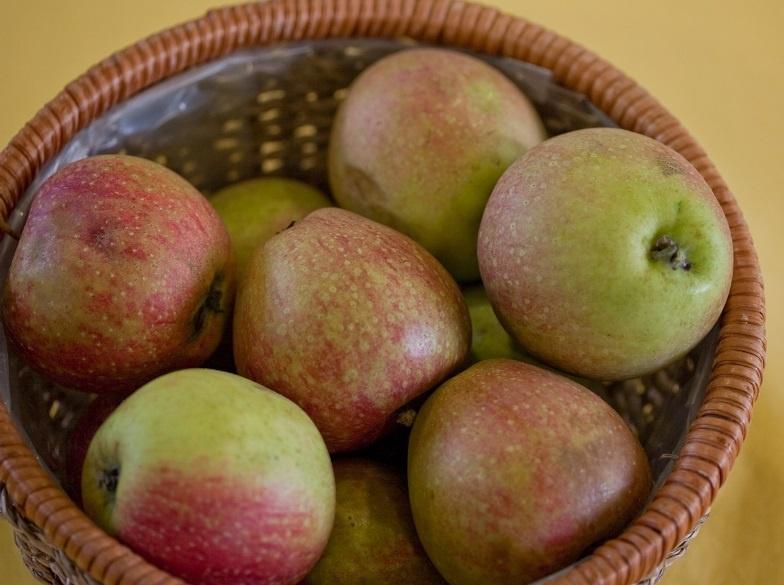 Сад: Популярные сорта яблонь и особенности их выращивания