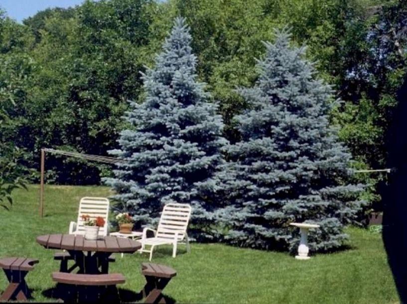 Ландшафтный дизайн: Декоративные деревья для сада и дачи