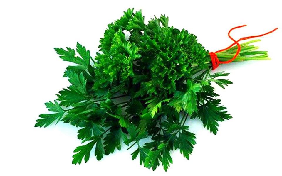 Огород: Как правильно сажать укроп и петрушку