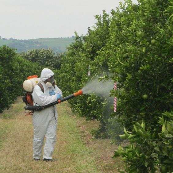 Сад: Чем опрыскивать яблоню