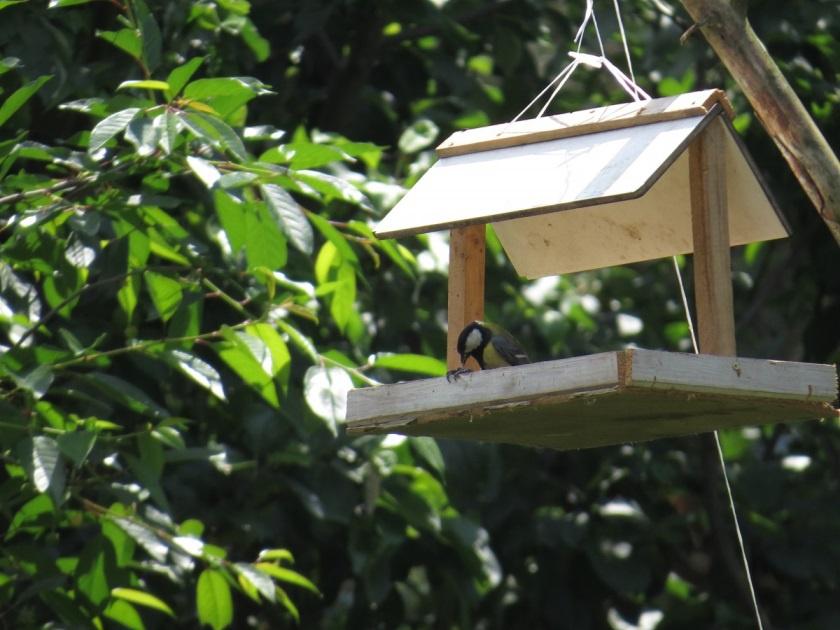 Обустройство: Кормушка для птиц
