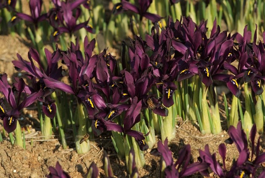 Цветы и клумбы: Цветы