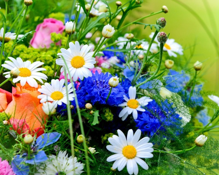 непрерывного цветения