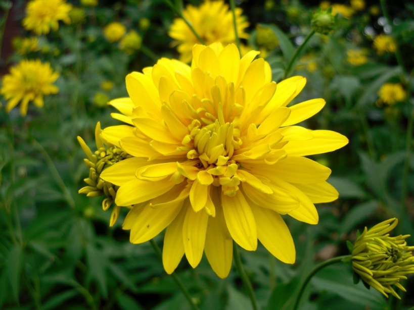 Цветы и клумбы: Бутон
