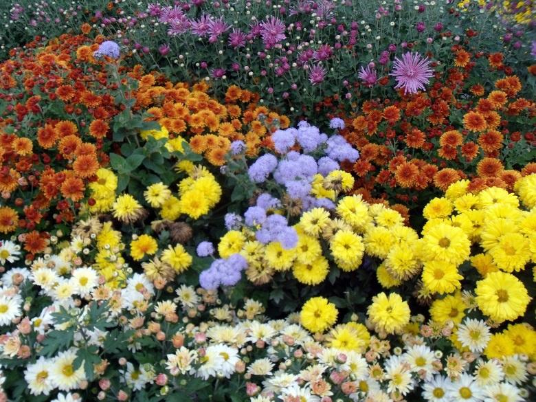 Цветы и клумбы: Схема