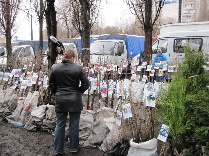 Сад: Продажа саженцев