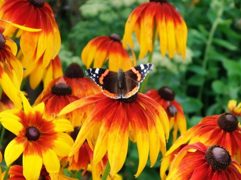 Цветы и клумбы: Бабочка на цветке