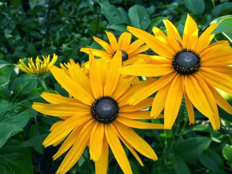 цветок прерий фото