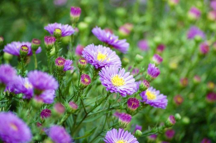 Цветы и клумбы: Красивые цветы