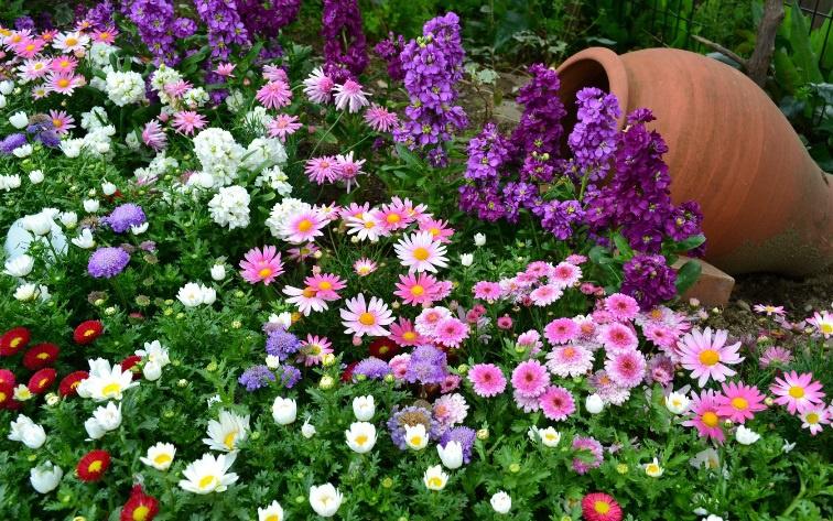 Цветы и клумбы: Клумба с кувшином