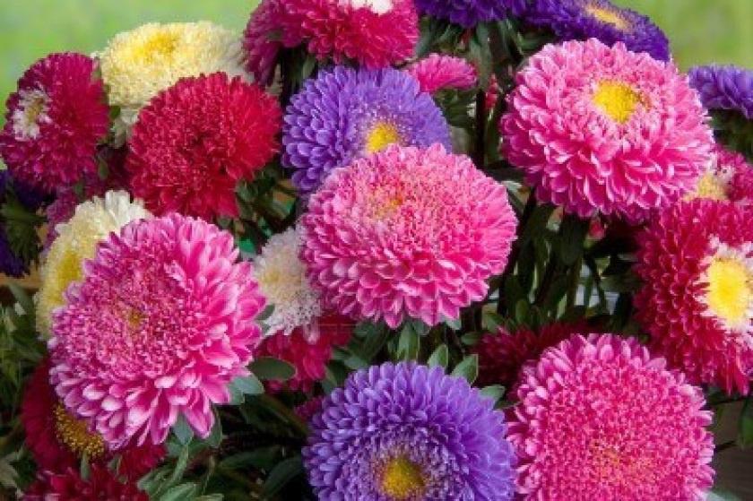 Цветы и клумбы: Букет