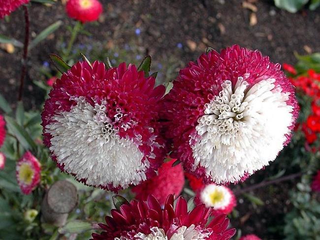 Цветы и клумбы: Необычные цветы