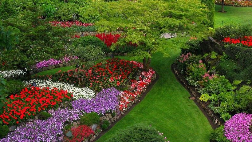 Цветы и клумбы: Клумба