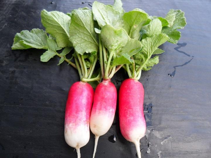 Огород: Польза редиса и его основные свойства