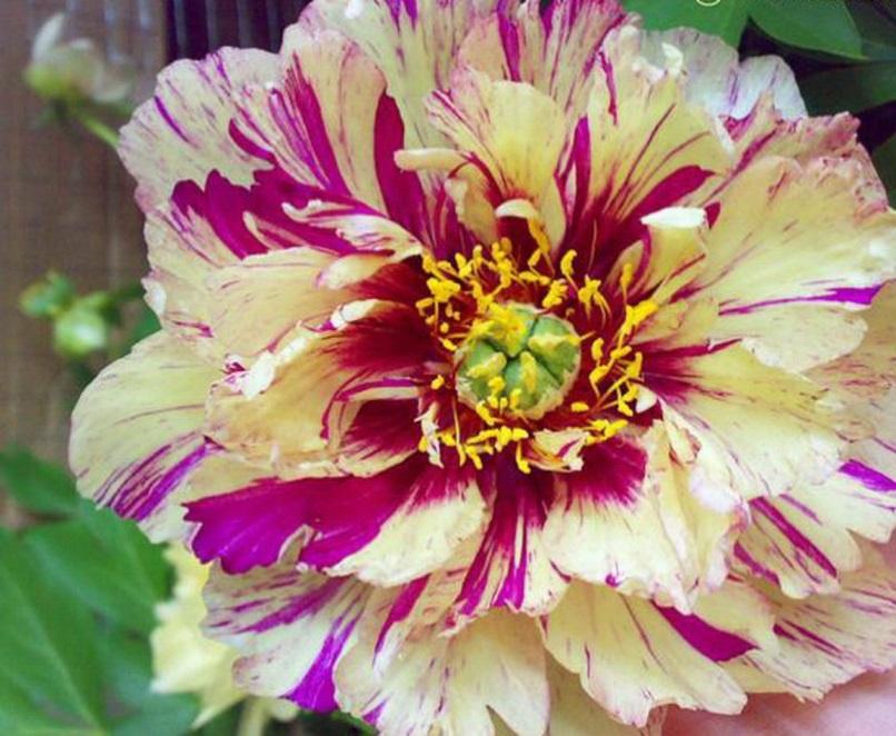 Виды садовых цветов для клумбы  фото и названия самых