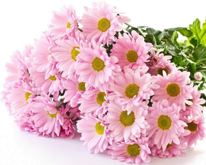 Цветы и клумбы: Букет хризантем