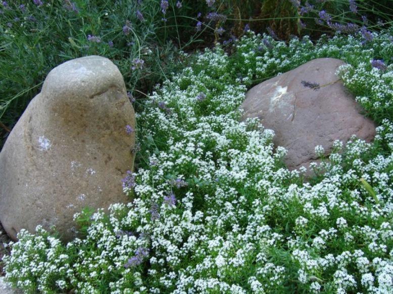 Ландшафтный дизайн: Декоративные камни на участке