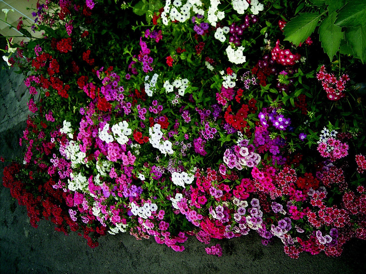 Почему белеет земля в горшке с цветком