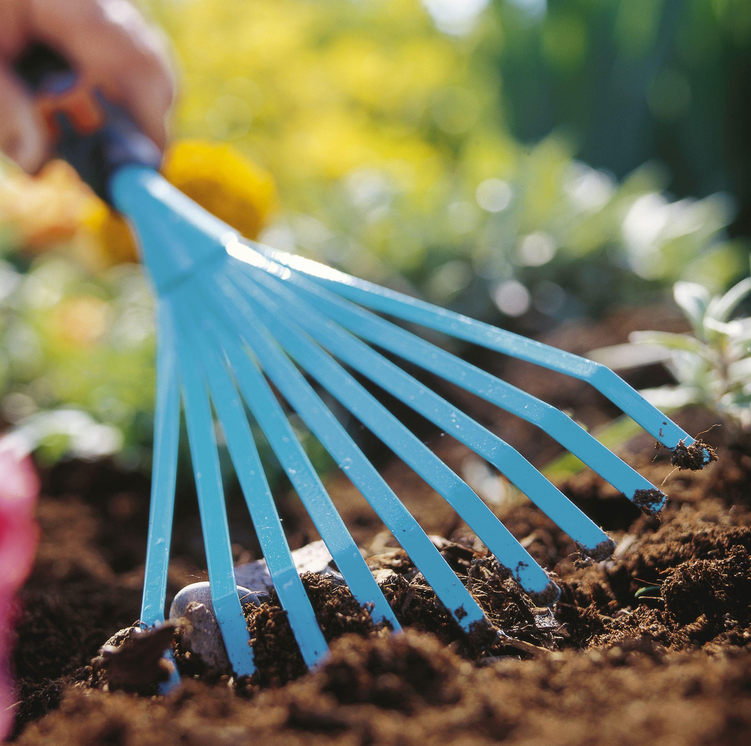 Огород: Корневой сельдерей: выращивание и уход