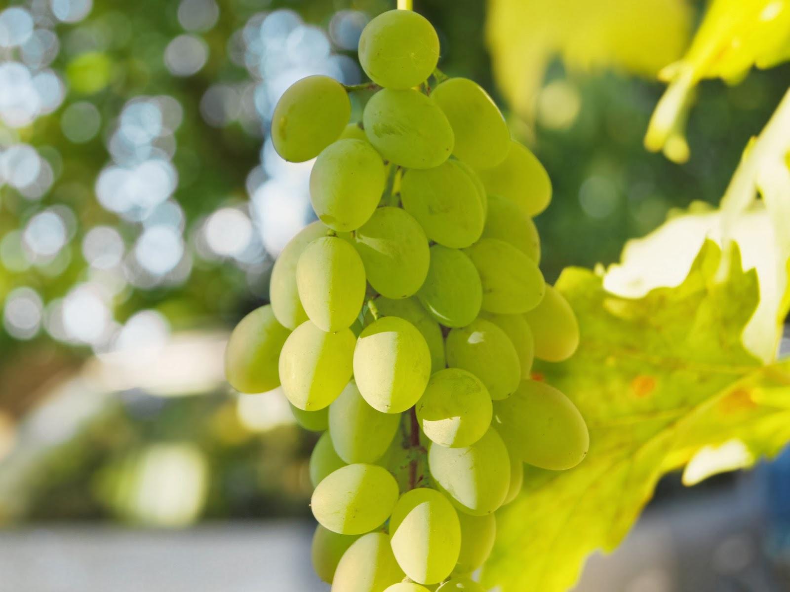 Сад: Сорта винограда