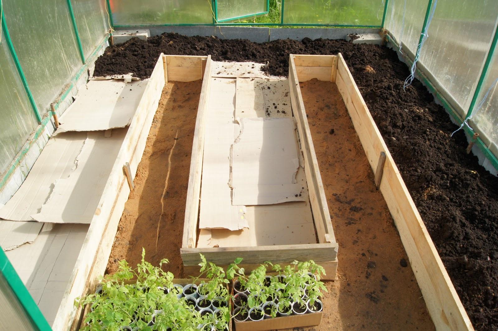 Сад: Технология выращивания клубники в теплице