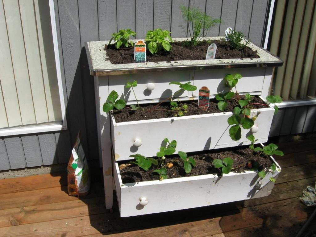 Сад: Способы выращивания клубники